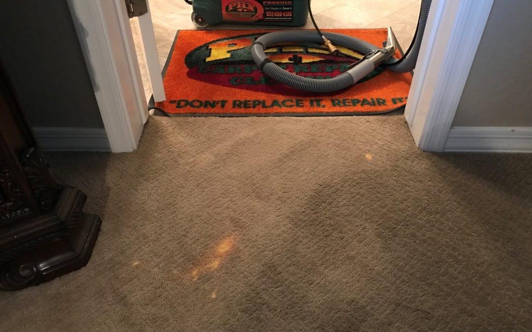 Maricopa, AZ: Carpet Dyeing